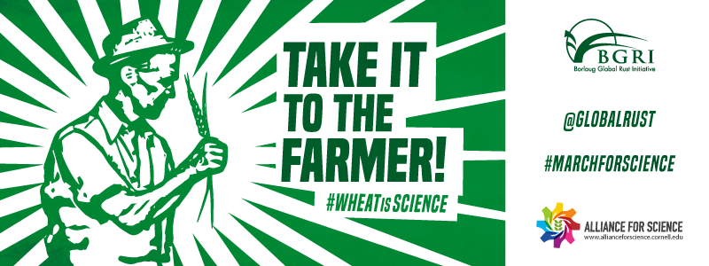 "<a href=""/posters"">Wheat is Science</a>"