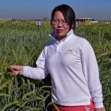 Caixia Lan