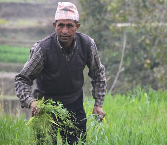 Bharat Prasad Lamichhane, a farmer and former agricultural extension officer in Jitpurphedi.