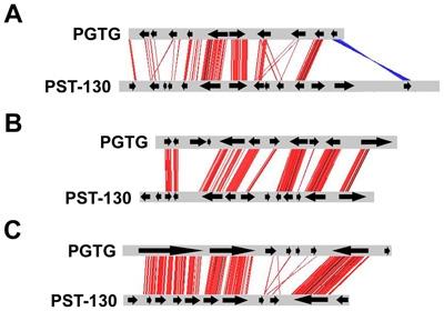Microsynteny between stripe rust and stem rust